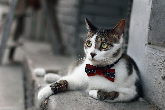Hello World Hi! Taking Photos Pets Cat Beautiful Day Holiday