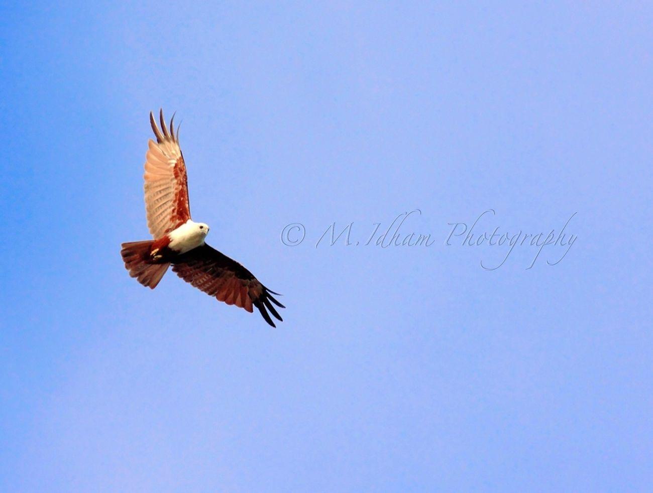 Wildlife Eye4photography  EyeEm Best Shots Bird Photography