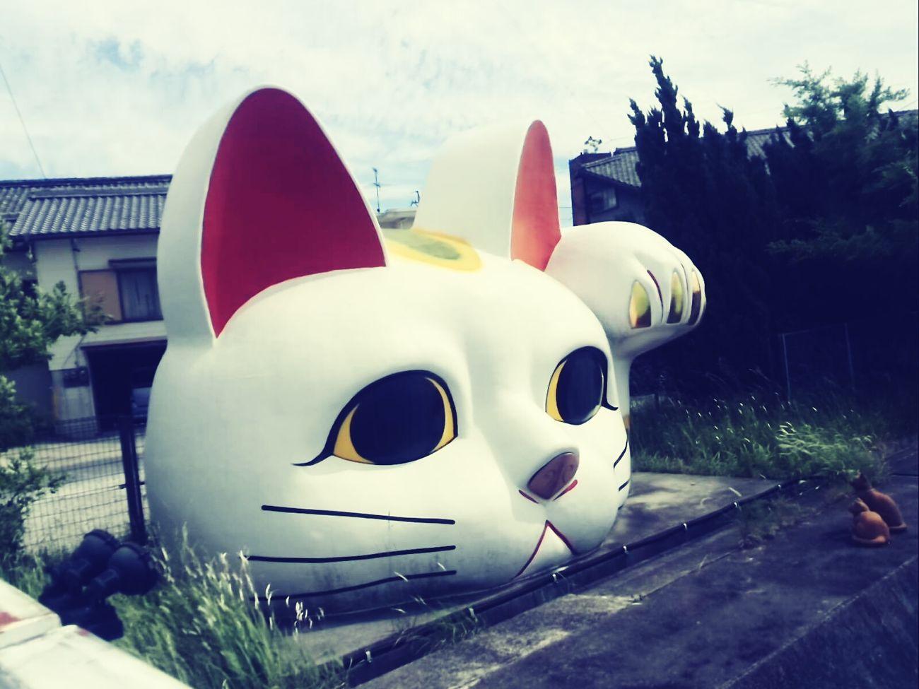 招き猫 Traveling