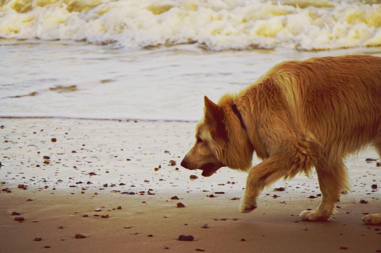 Dog Beach Frinton