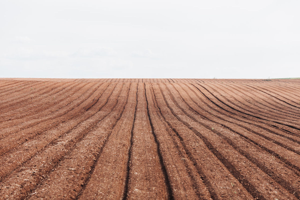 Agricultural Land Agriculture Agriculture Brown Cereal Cereal Plant Copy Space Day Environment Farm Farm Growth Harvest Land Landscape Nature No People Outdoors Patern Plowed Field Rural Scene Seed Seeds Sky Wheat