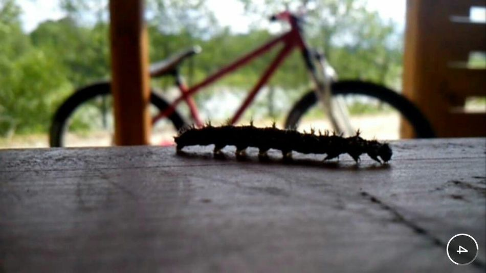 Insects  Bike Biketime Trip River Relax Sunny Day