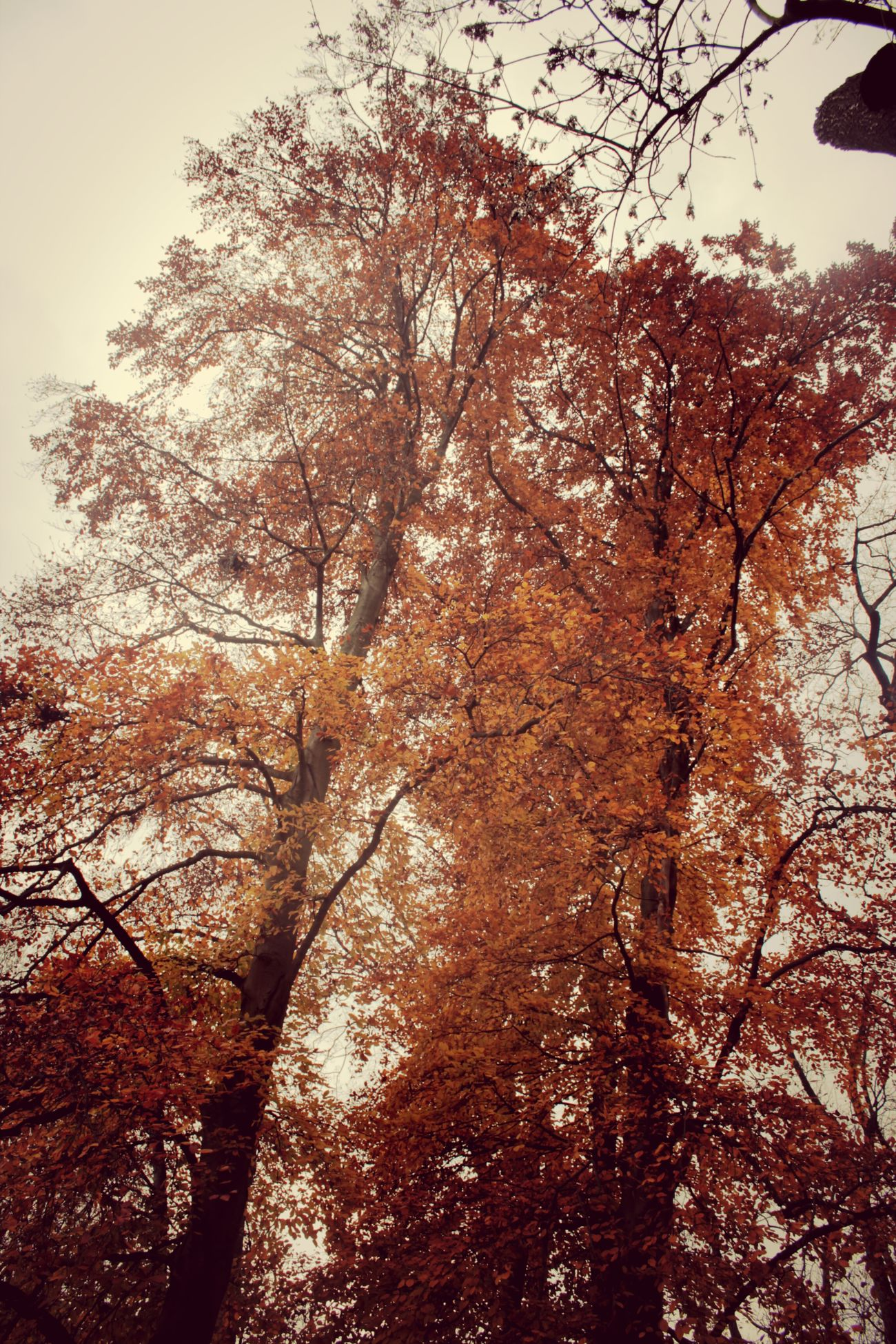 Prague Trees Praha Autumn