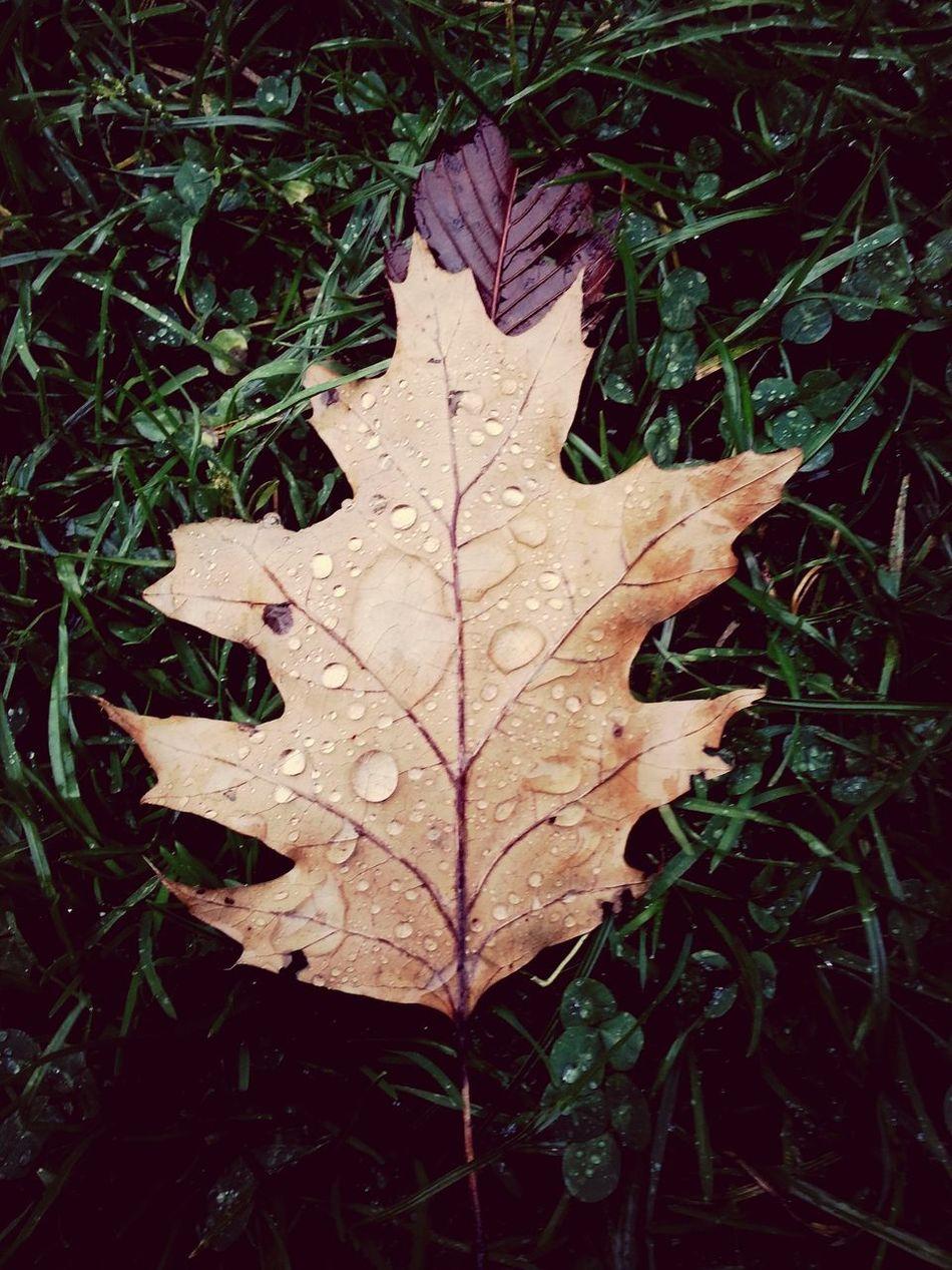 leaf at central park