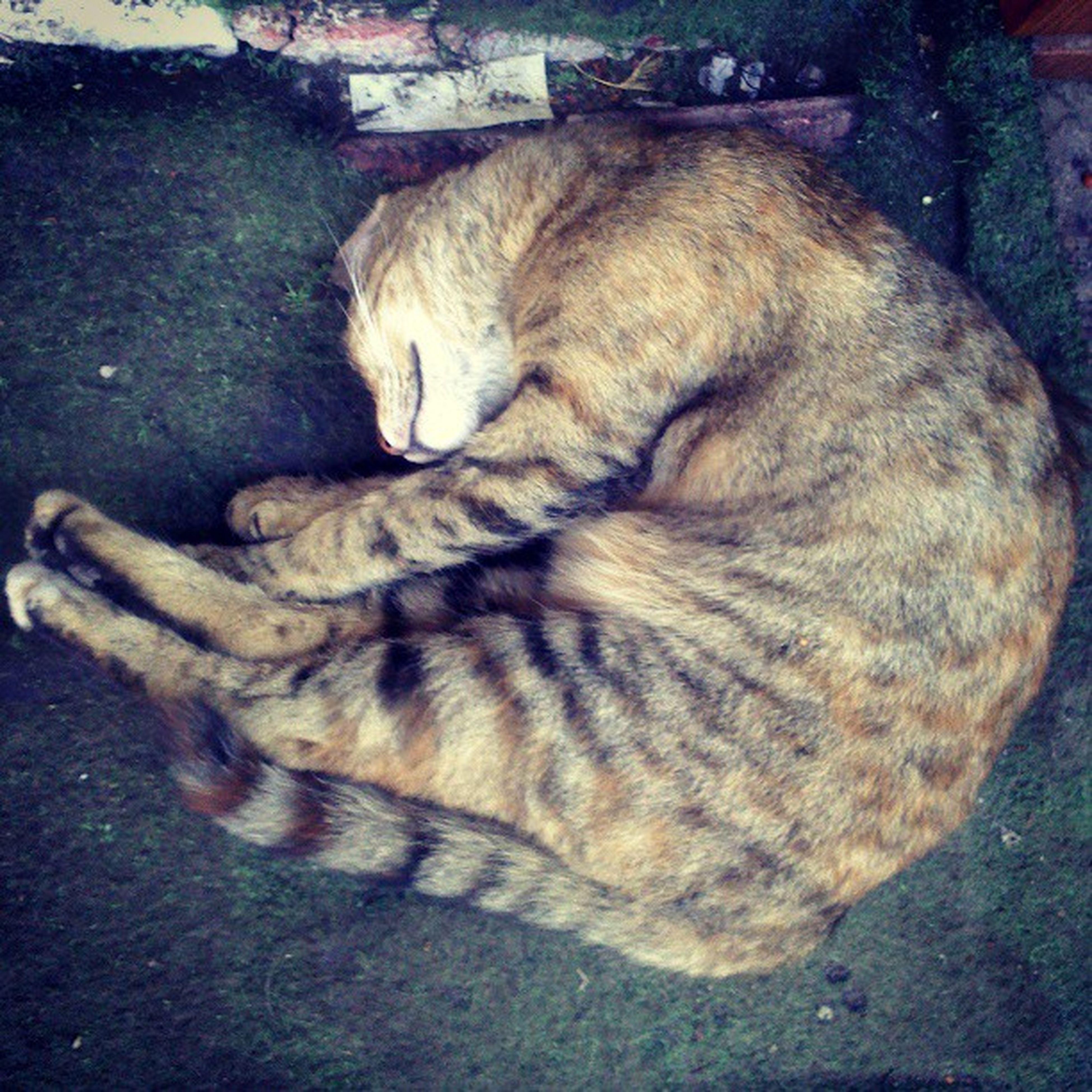Cat Sleeping Comfortable