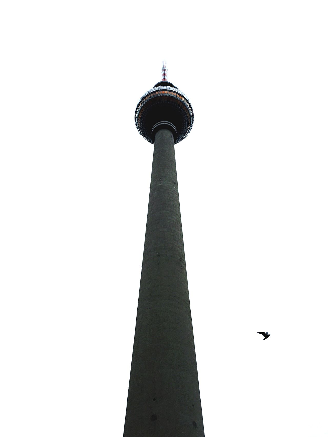 TV Tower Tower Architecture Infinity Berlin Bird Open Edit Smart Simplicity Amazing Architecture The Architect - 2015 EyeEm Awards Battle Of The Cities TakeoverContrast Welcome To Black