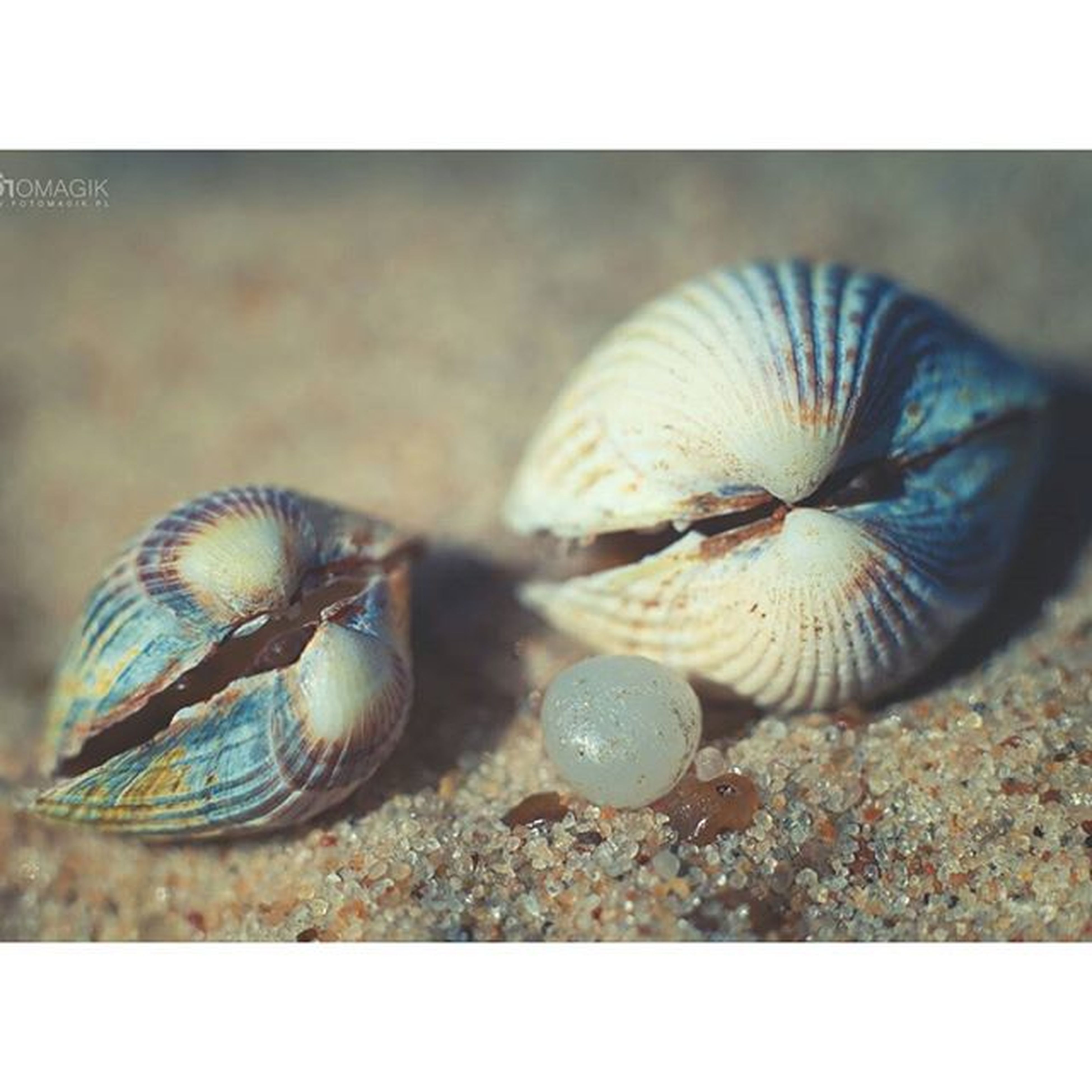 animal themes, animals in the wild, wildlife, one animal, close-up, animal shell, transfer print, natural pattern, insect, auto post production filter, nature, shell, focus on foreground, snail, zoology, day, outdoors, seashell, no people, selective focus