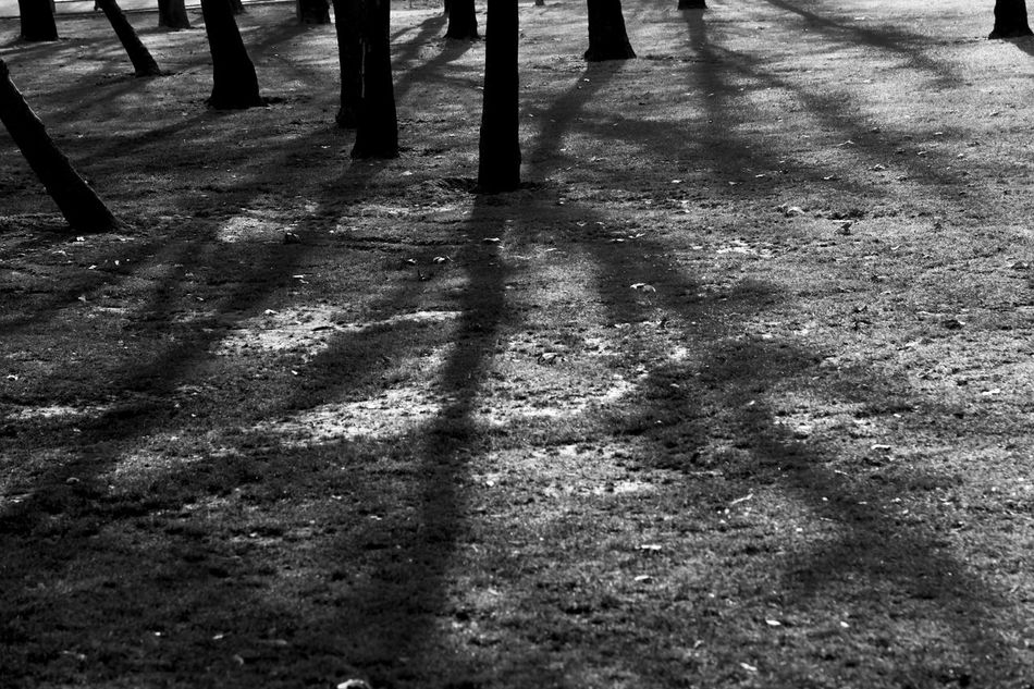 here is melat park in tehran and these are shadows of trees. Art Is Everywhere Iran Iran♥ Melat Park Park Tehran Tehran, Iran Tehran_pix Tehranpic