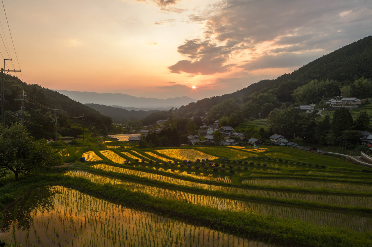 明日香村棚田の夕景 Terraced Rice Fields From My Point Of View Nara Japan Nature Pastel Power Catch The MomentSunset Pastel 43 Golden Moments Ultimate Japan Colour Of Life My Fevorite Place