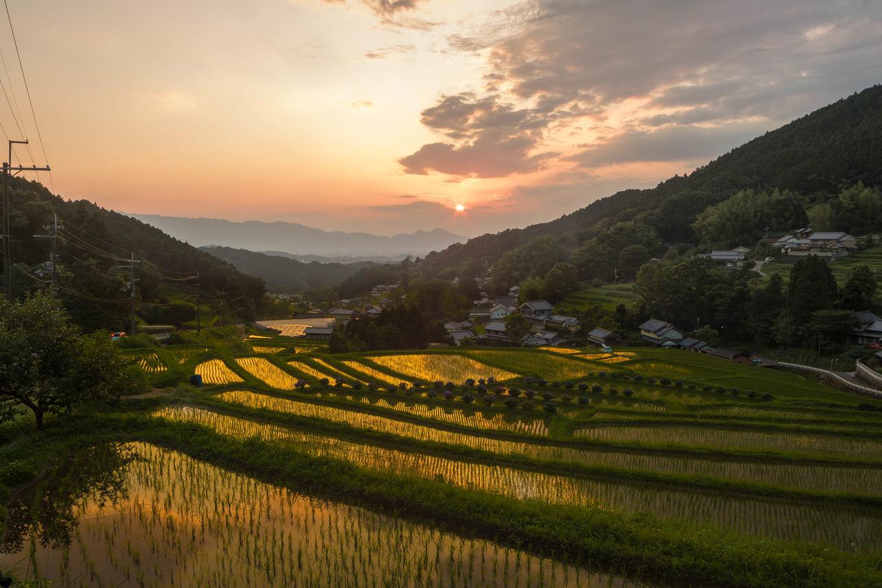 明日香村棚田の夕景 Terraced Rice Fields From My Point Of View Nara Japan Nature Pastel Power Catch The MomentSunset Pastel 43 Golden Moments Ultimate Japan Colour Of Life My Fevorite Place