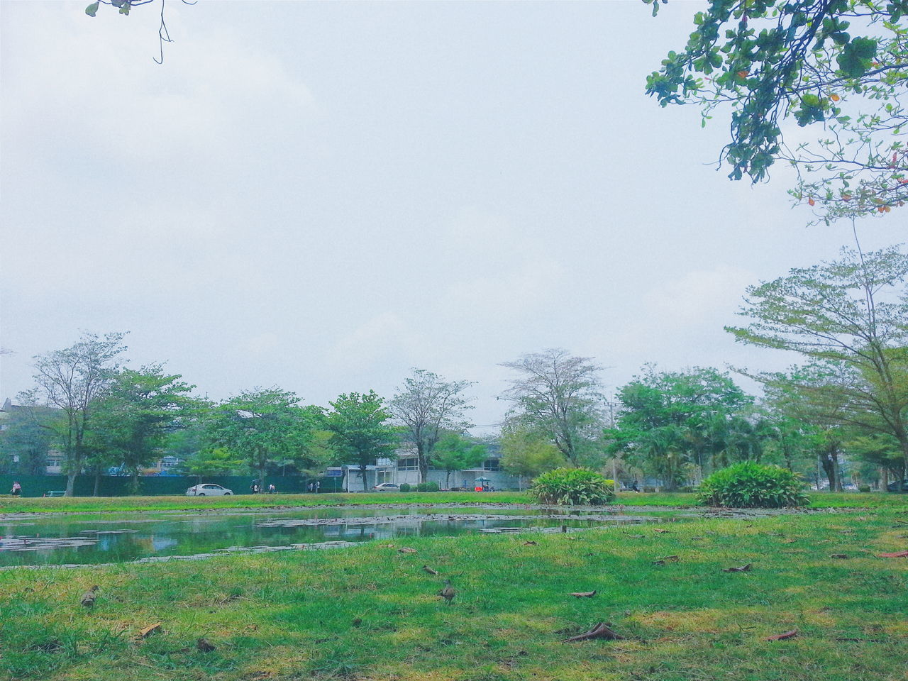 ณ มหาวิทยาลัยรามคำแหง บางนา สวนสาธารณะ ทิวทัศน์ รามคำแหง ต้นไม้ ท้องฟ้า First Eyeem Photo