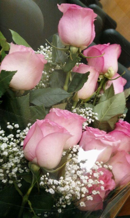 Pink Color Freshness Flower No People One Dozen Pink Roses