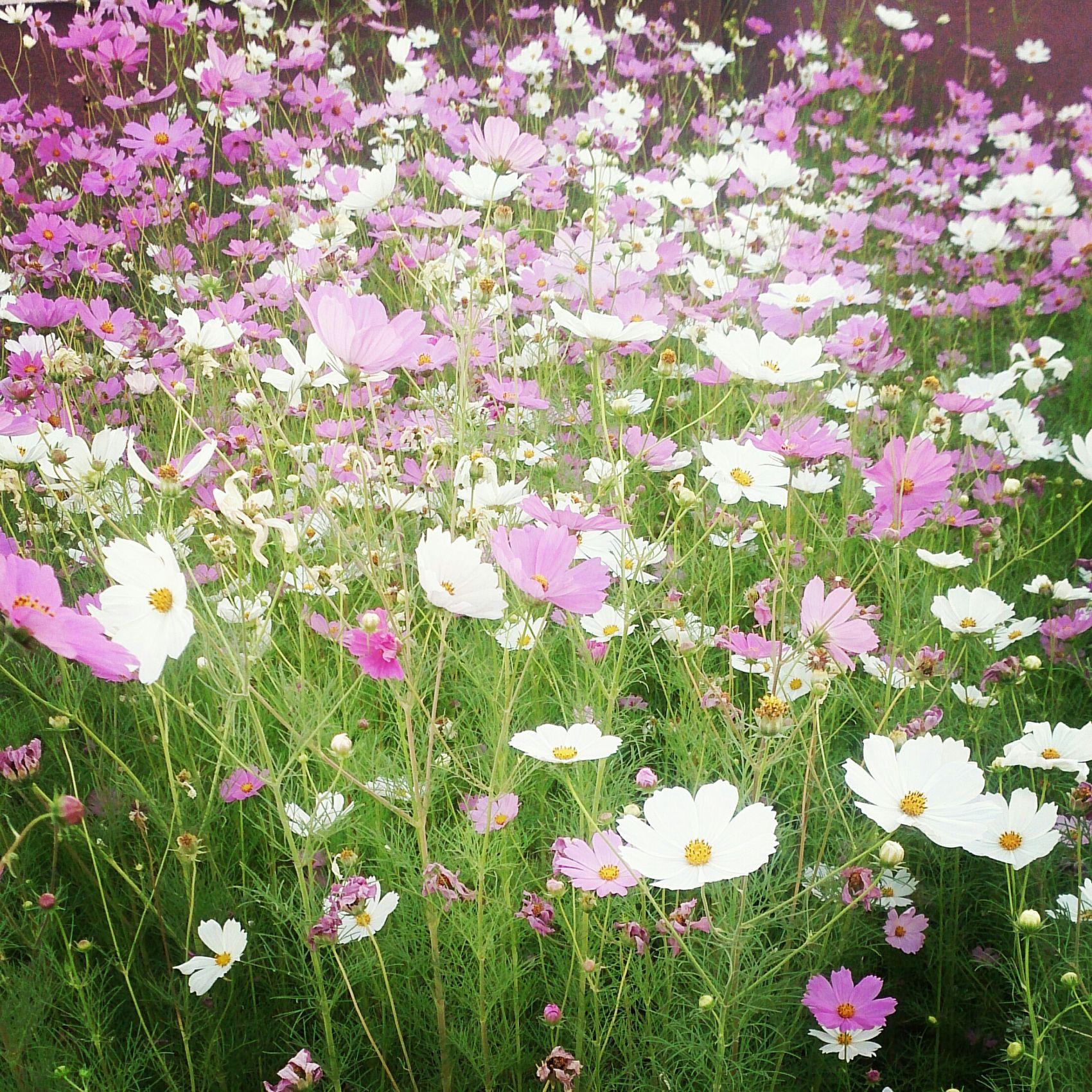 Flowers Beatiful Nature Sunnyday☀️ Colors EyeEm Nature Lover EyeEm Gallery Newphotographer