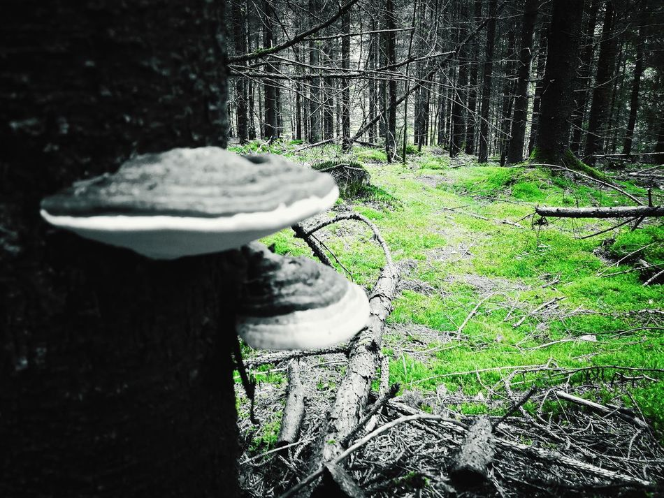 No People Nature Outdoors Fragility Edited Manipulated Green Woods WoodLand Mushroom Sopp Norway Skog Redigert Tranquility Colorfun Funwithfilters Filter Forrest Photography Forrest