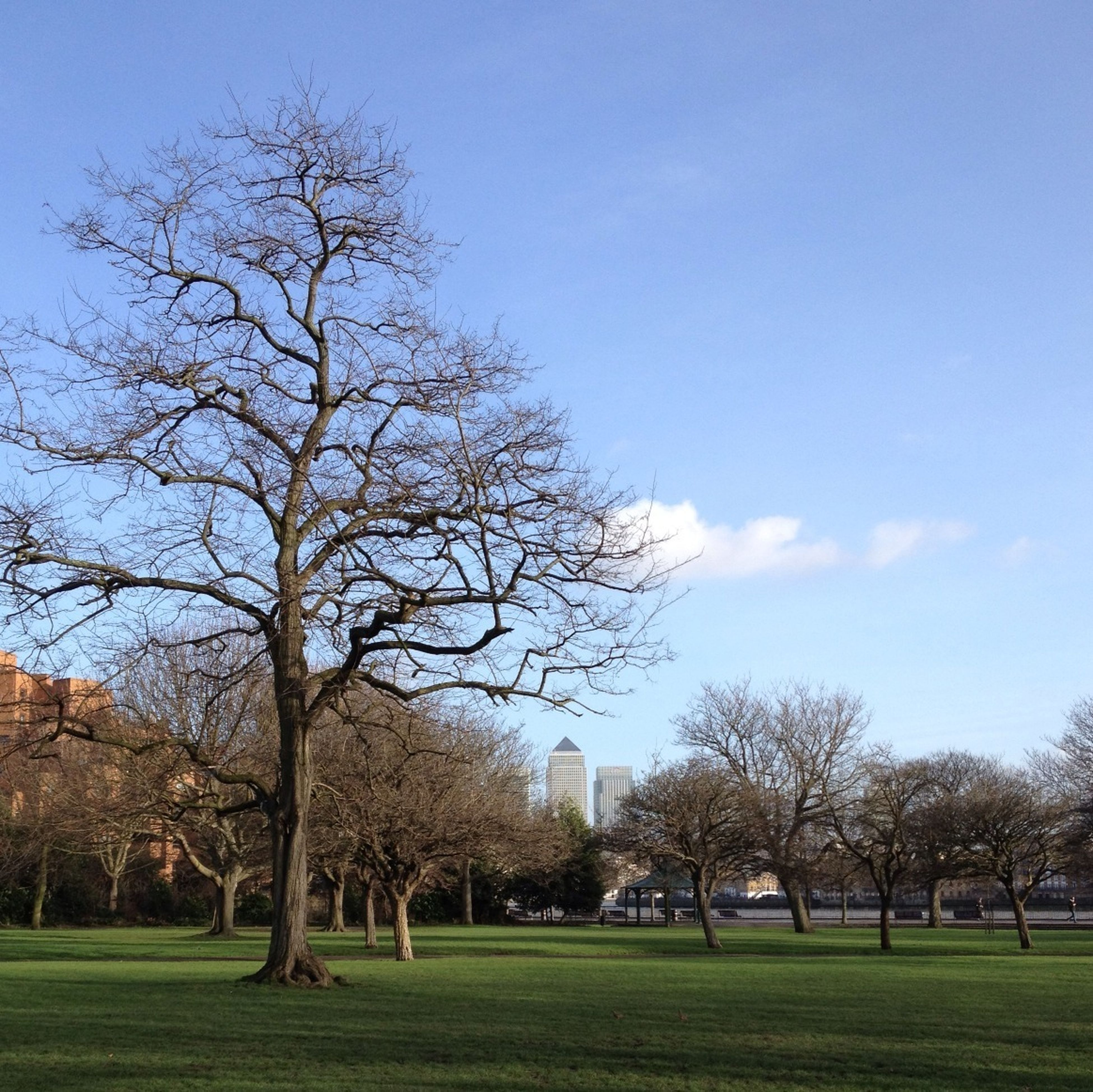 tree, grass, bare tree, sky, blue, landscape, green color, branch, tranquility, field, tranquil scene, nature, park - man made space, grassy, tree trunk, beauty in nature, growth, scenics, lawn, day