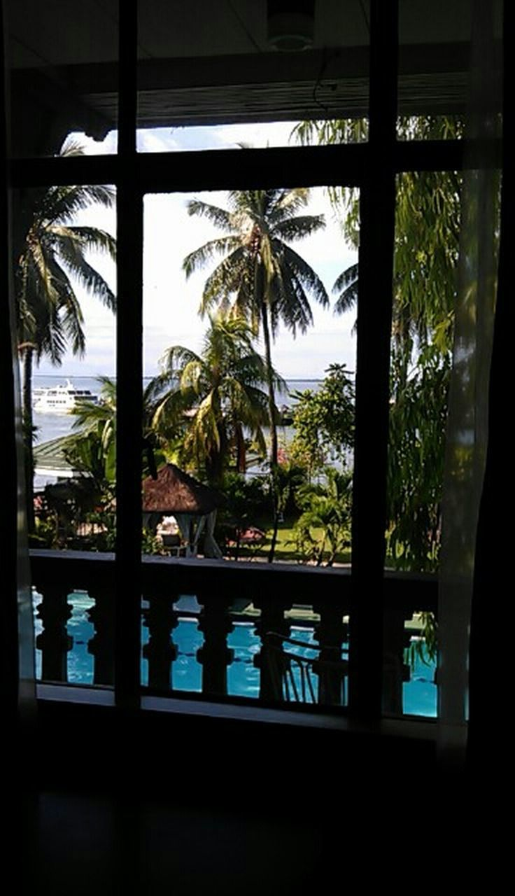 palm tree, window, tree, indoors, no people, nature, day, vacations, sky, close-up, beauty in nature