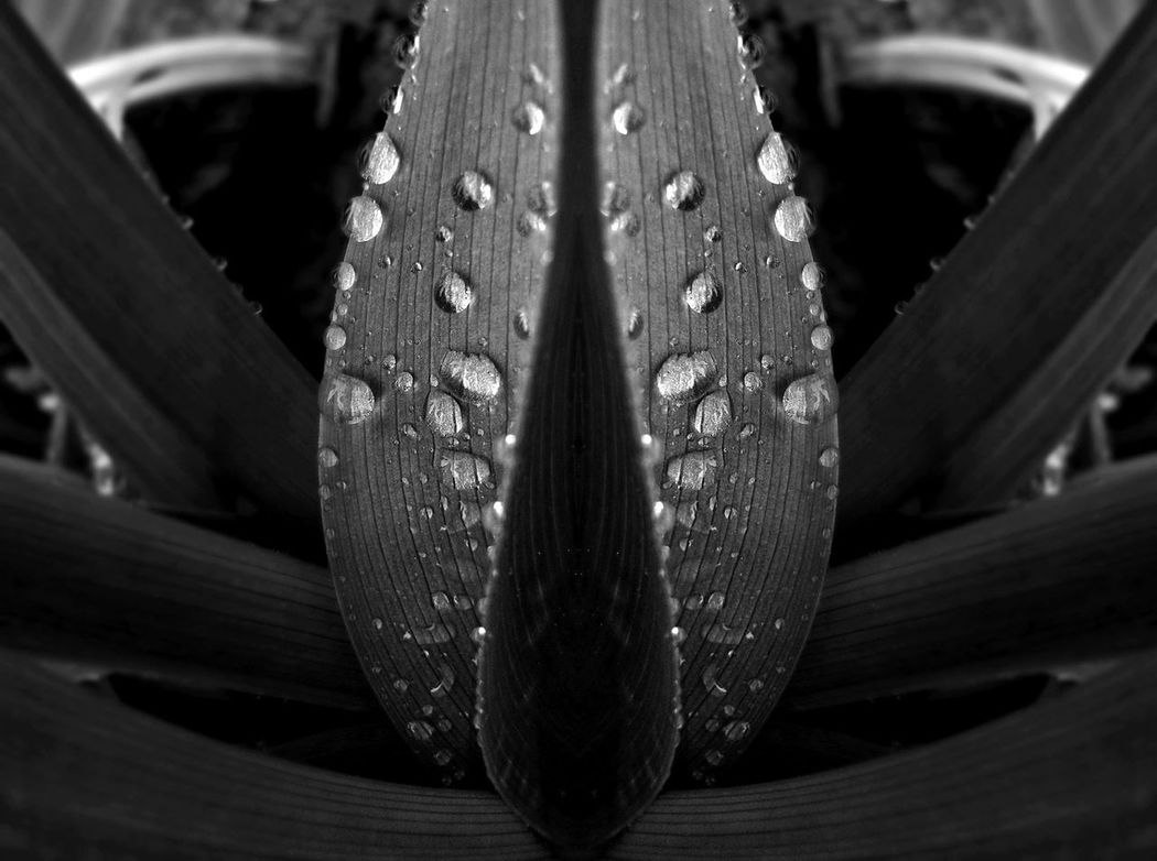 simply: wet ;) Adult Adults Adults Only Animal Themes Animals In The Wild Close-up Day Nature No People One Animal Outdoors Plank Plant Water Waterdrop Waterdroplets Waterdrops Waterdropsphotography Wet Wet Leaf On The Ground Wet Leave Wet Leaves Wood - Material
