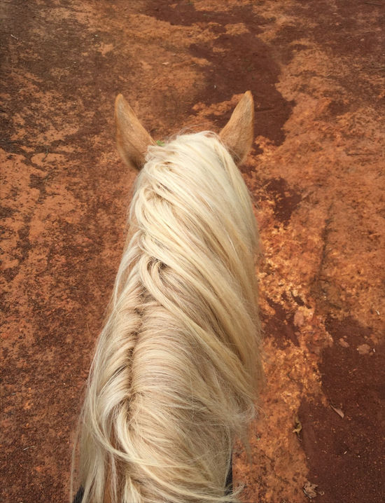 Palomino on red soil Animal Themes Blond Hair Bush Close-up Day Domestic Animals Horses Mammal Nature One Animal One Person Outdoors People Pets Real People Rear View