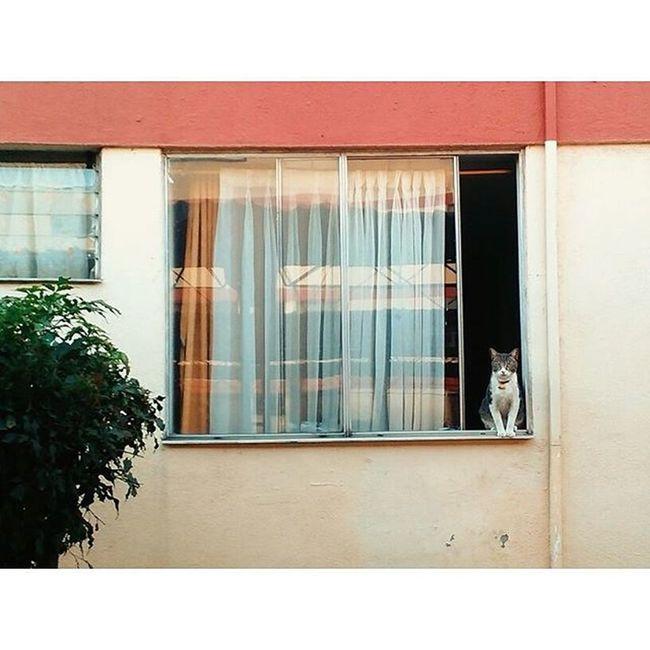 Mi vecino!! 😻 Ilovecat Cat Window Neighbor Cute House Urbanphotography Alamos Cali Colombia Huawei Vscocam Everydaymacondo