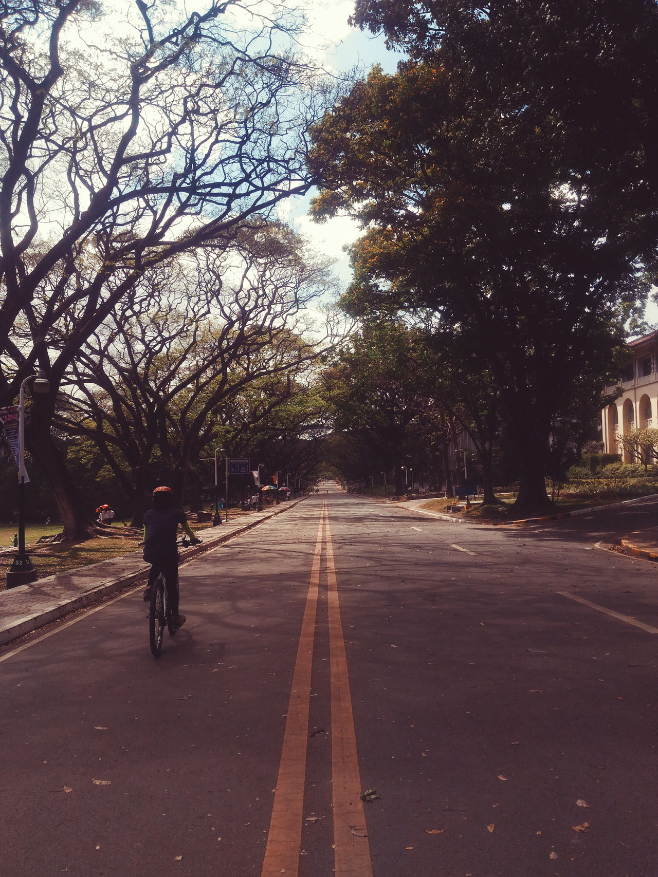 The Way Forward Tree Road Outdoors Day Transportation Nature Road Sign Beauty In Nature Sky Cycling Bicycle Bike Cyclist No Car Trees Along The Road Field University Of The Philippines Up UP Diliman University Campus Open Road Clear Road Acasia Tree