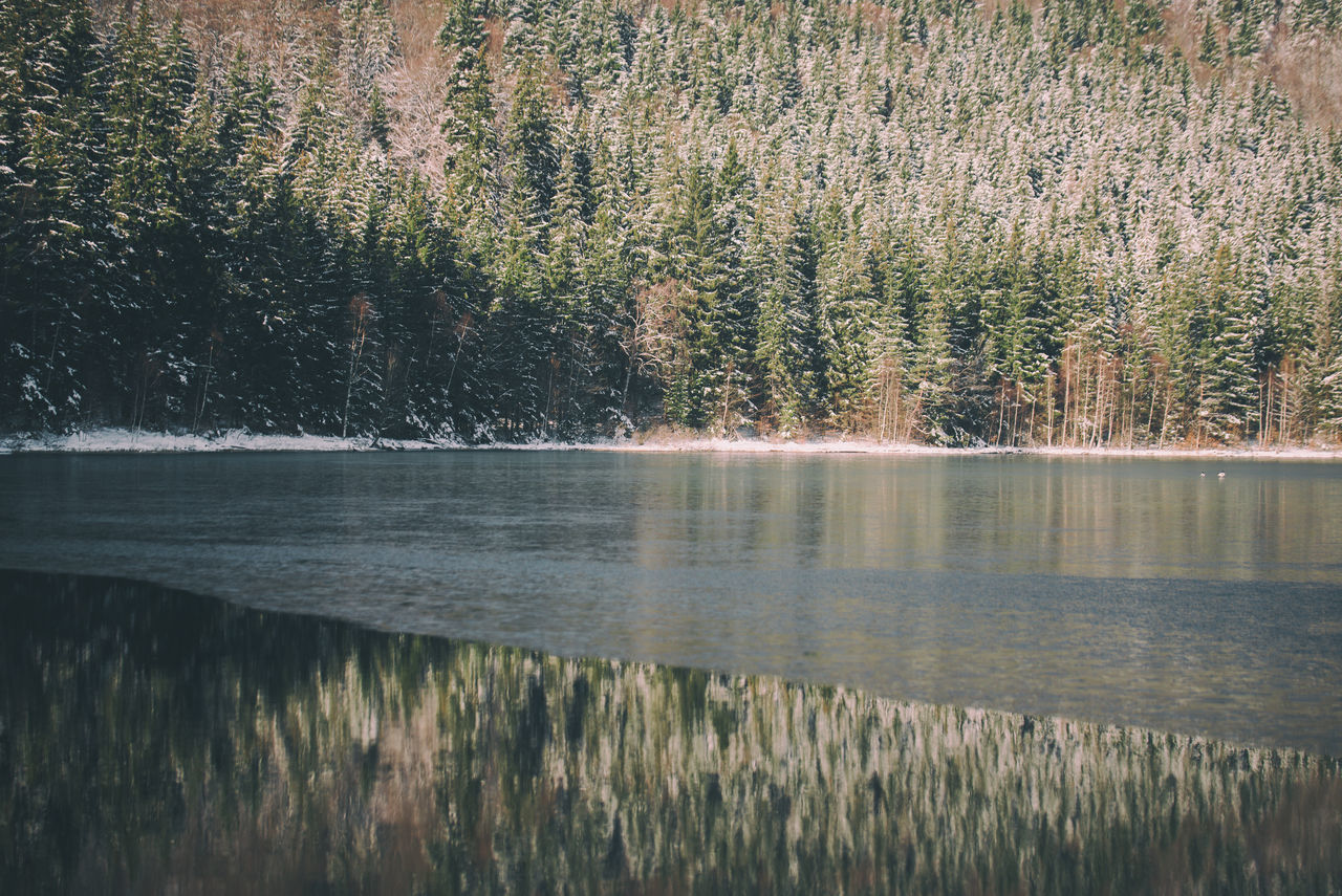 Day Evergreen EyeEm Gallery Film Frost Frozen Lake Green Growth Icy Lake Nature Nature_collection Naturelovers No People Outdoors Pine Tree Reflection Scenics Sky Sunlight Tranquil Scene Tranquility Tree Trees Water