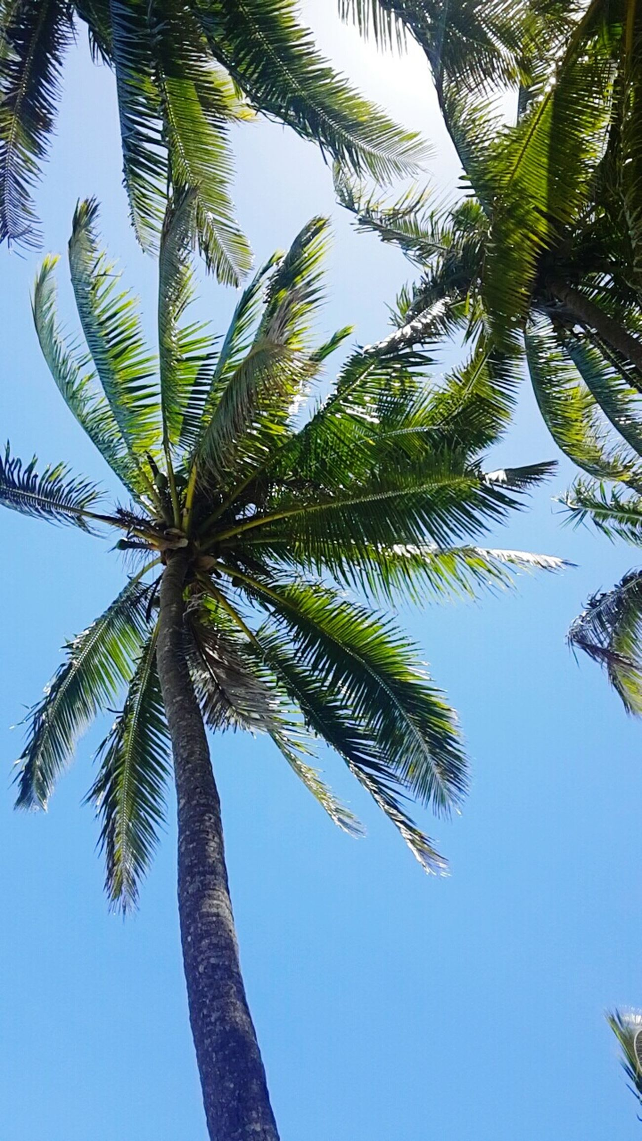 Blue Skies ⛅ Photography Fiji ❤🌴 Pacificharbor Relaxing Check This Out
