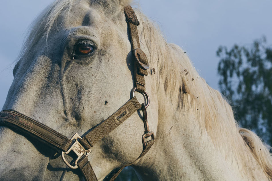 Animal Animal Body Part Animals Bridle Close-up Cropped Day Eye Focus On Foreground Herbivorous Horse Horses Lifestyles Mammal Nature Outdoors Part Of Popular Popular Photos Portrait Sad Sadness Sky The Week On Eyem Vscocam Market Reviewers' Top Picks