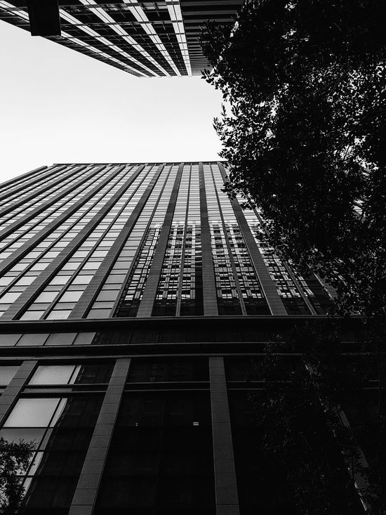 Black And White Black And White Photography Building High Low Angle Outdoor Photography No People Trees