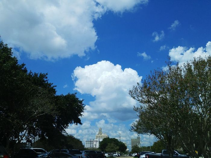 Tree Sky Cloud - Sky Growth Blue No People Cloudscape Treetop Outdoors Scenics City Life Downtown Beaumont Beauty In Nature Nature Low Angle View