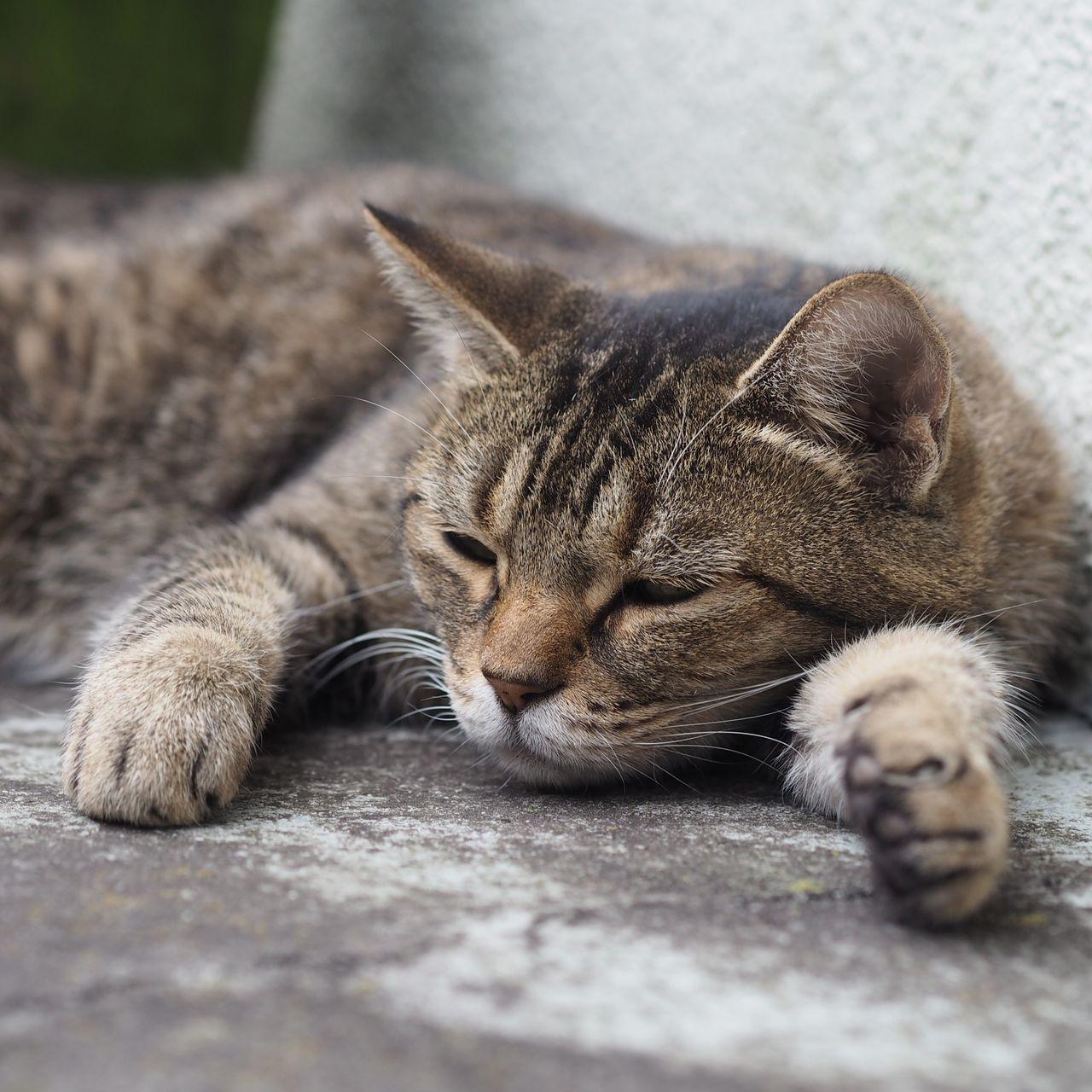 前脚(笑)!Animal Cat Capture The Moment Stray Cat Catsofinstagram Sleeping Taking Pictures Taking Photos Relaxing Cats Of EyeEm