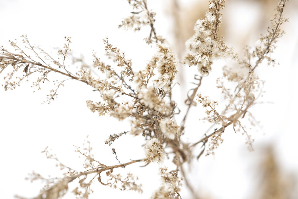 Beauty In Nature Branch Close-up Day Flower Freshness Fujifilm FUJIFILM X-T1 Fujifim Growth Nature No People Outdoors Selective Focus Snow Tree White Winter Minimalism EyeEm Nature Lover EyeEm Best Shots