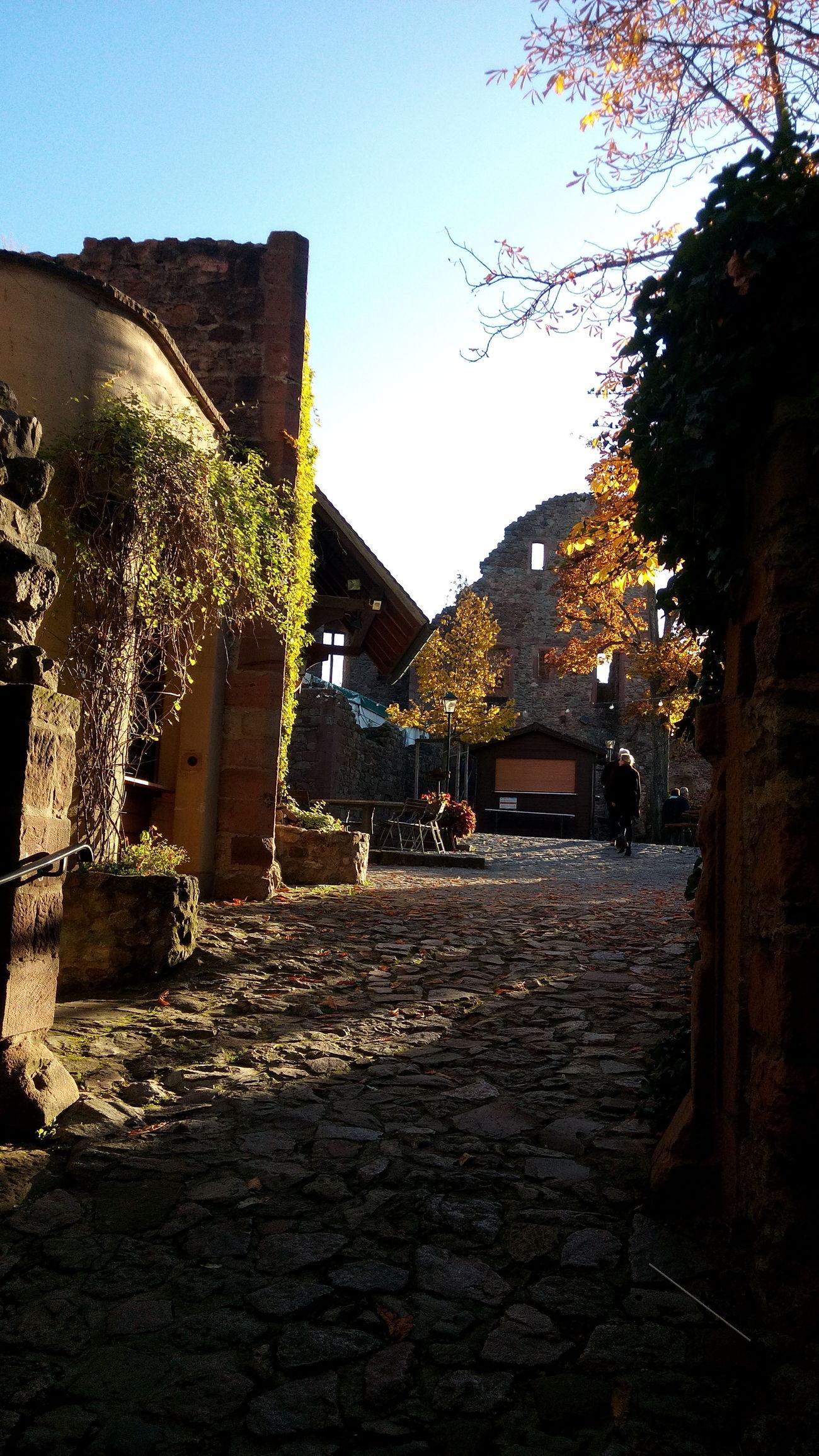 Outdoors Building Exterior Built Structure Architecture Weinheim Castle History Autumn🍁🍁🍁 Autumn Autumn Colors Nature Mountain Autumn Mood Multi Colored
