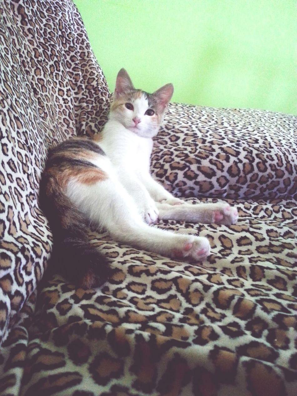 Ilovemycat Lovelydaughter Cat Model