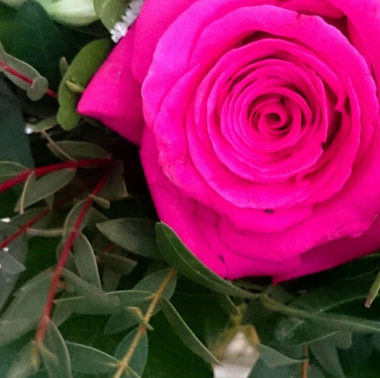 Roses A Rose Pink Pink Rose Pink Flower Flower Flowerporn Flower Collection Spring Spring Flowers