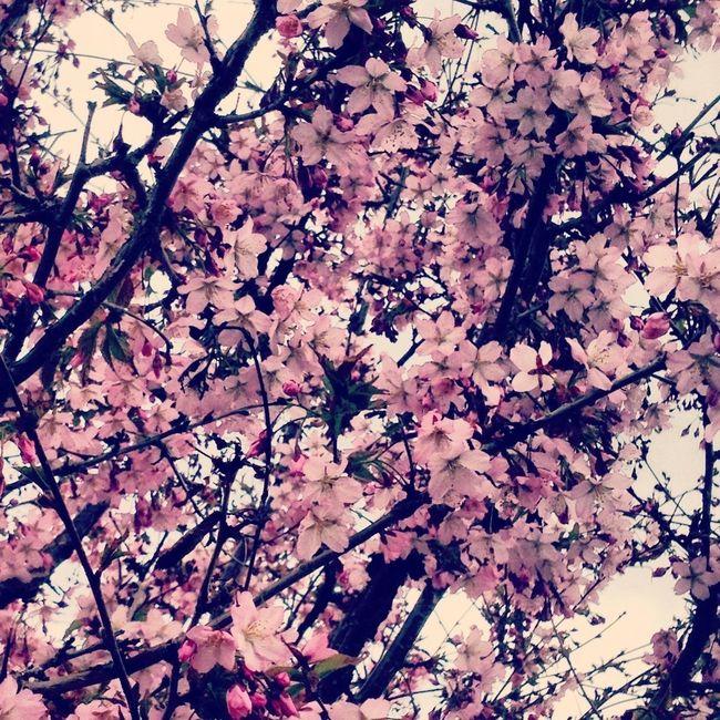 Flowers Nature Trees EyeEm Nature Lover