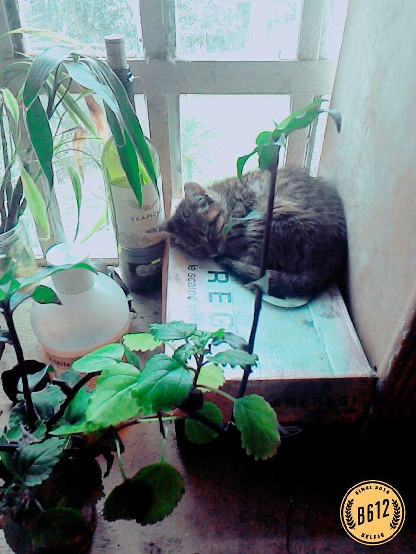 Love Cats So Cutie ^^ Sleeping Cat