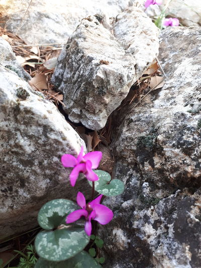 Flower Pink Color Fragility Nature No People Day Petal