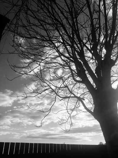 Bare Tree Sky Silhouette Nature Outdoors Cloud - Sky Blackandwhite B&w Street Photography Beauty In Nature Country Country Life Sunlight Taking Photos IPhoneography Outdoor Photography Enjoyng Life Lifestyles Wintercolors