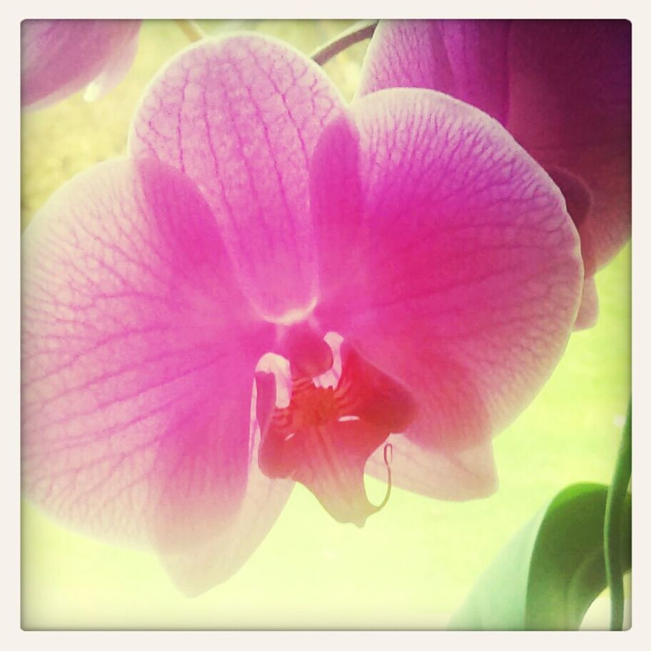 Orchid First Eyeem Photo