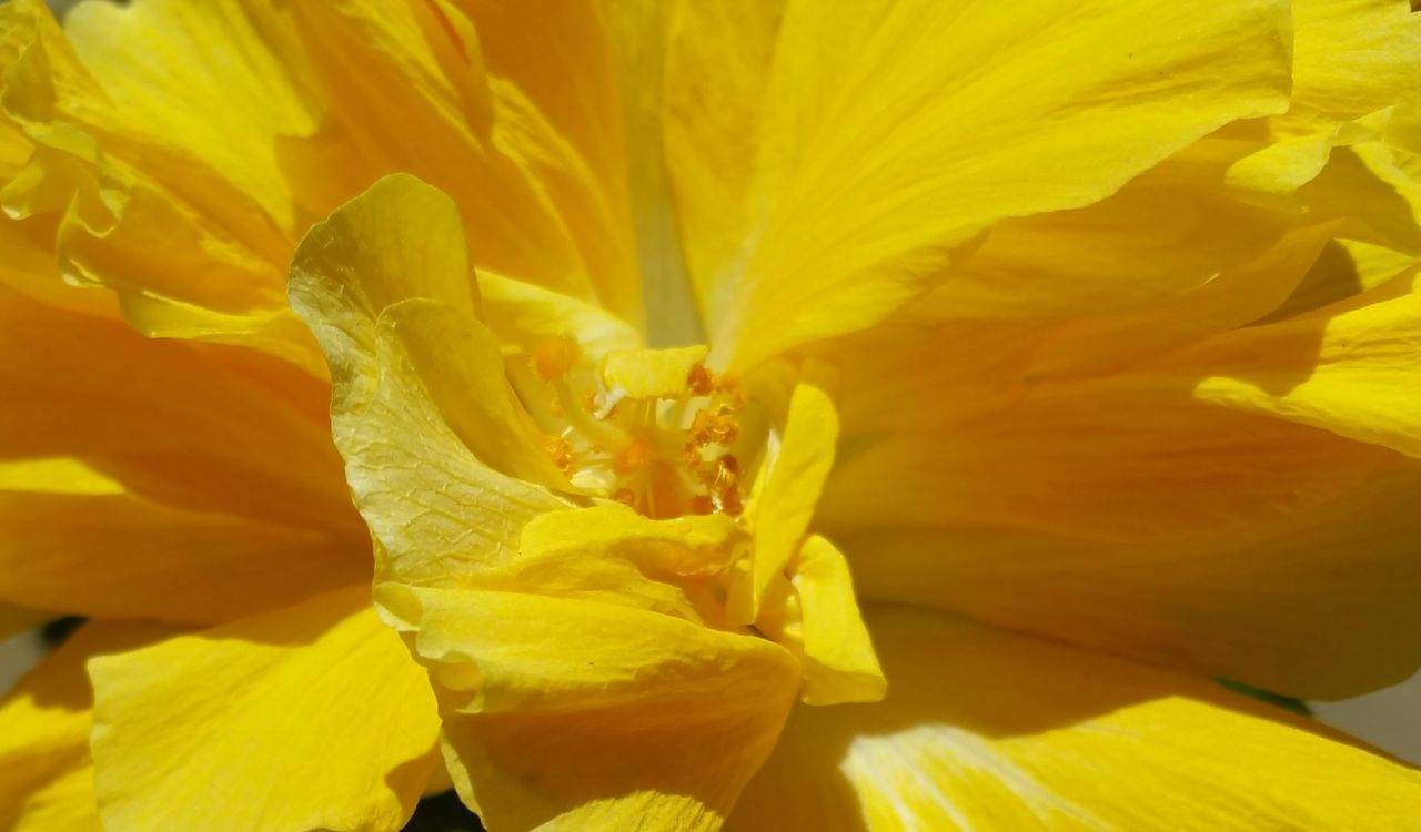 MACRO SHOT OF YELLOW FLOWER