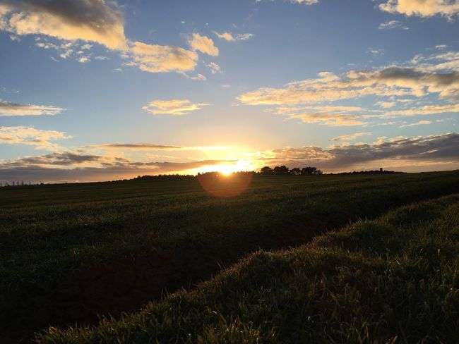 Nofilter Dngrsdn Sundown Running Perfectshot Outdoors Beauty In Nature Nature Germany