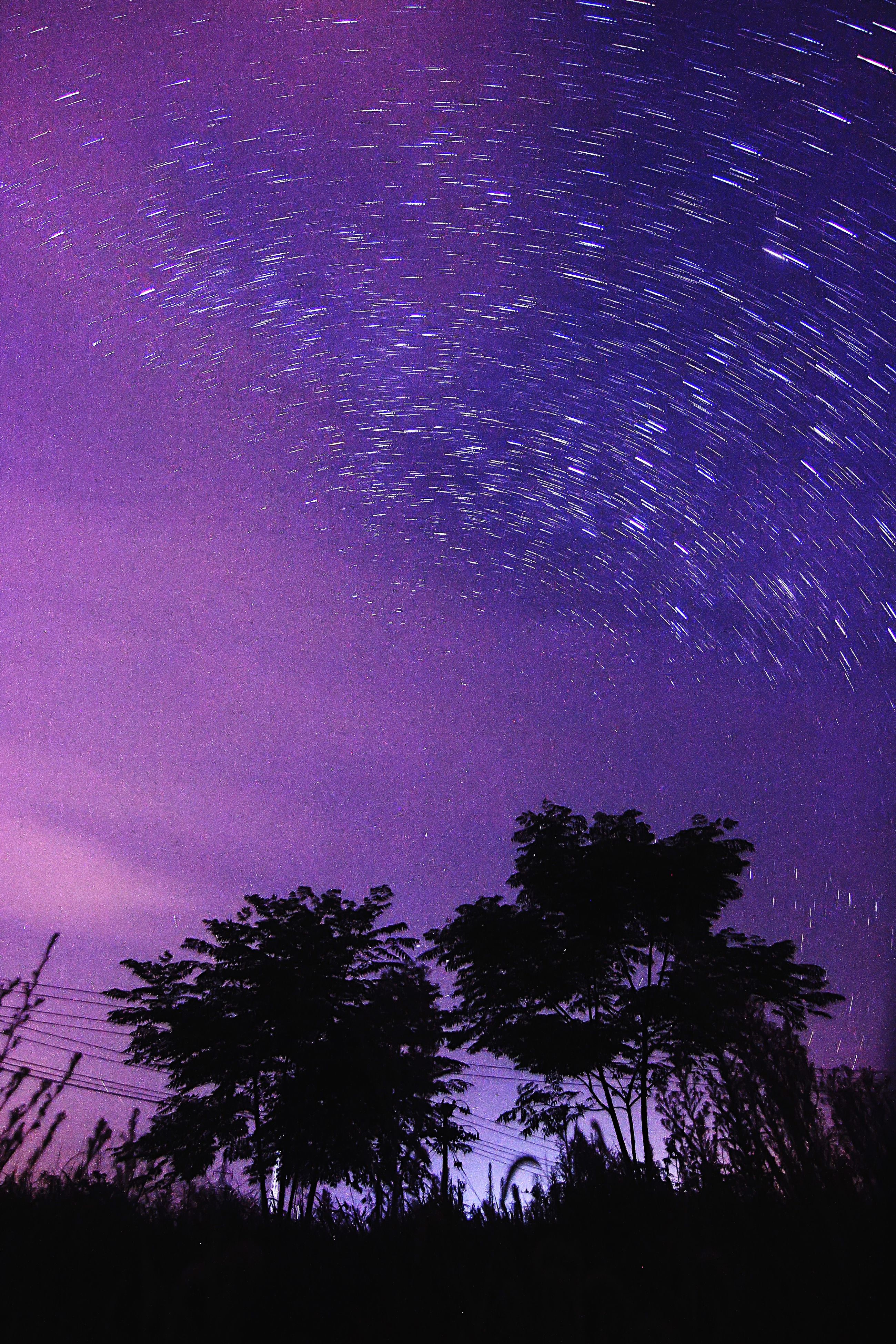 night, star - space, star field, astronomy, galaxy, tree, scenics, star, beauty in nature, tranquil scene, space, tranquility, sky, low angle view, infinity, milky way, silhouette, constellation, nature, idyllic