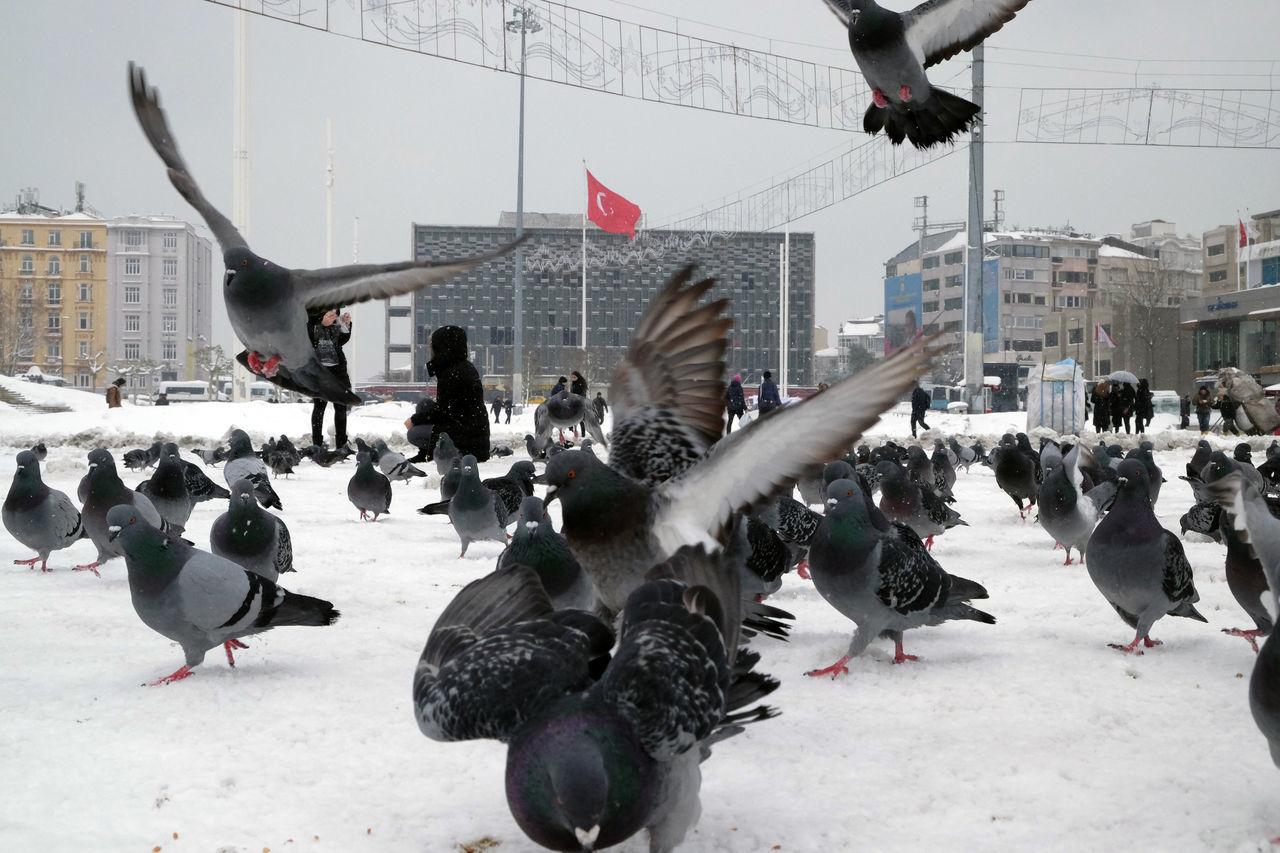 Beautiful stock photos of tiere, city, bird, snow, winter
