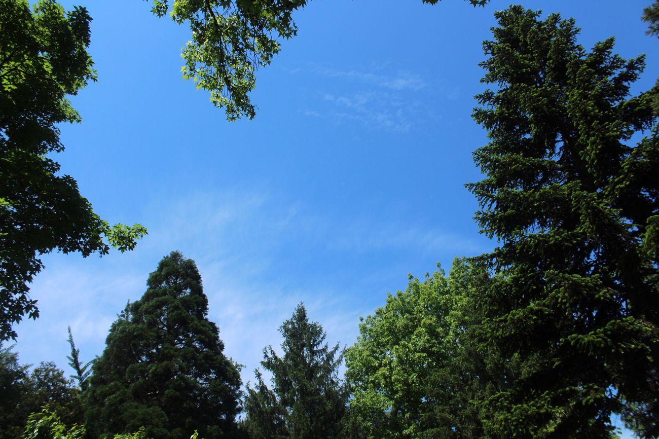 Yalova Low Angle View GreenAndBlue  Treeandsky Arberotom