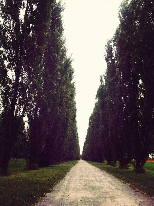 Park Green Trees Empty #milan