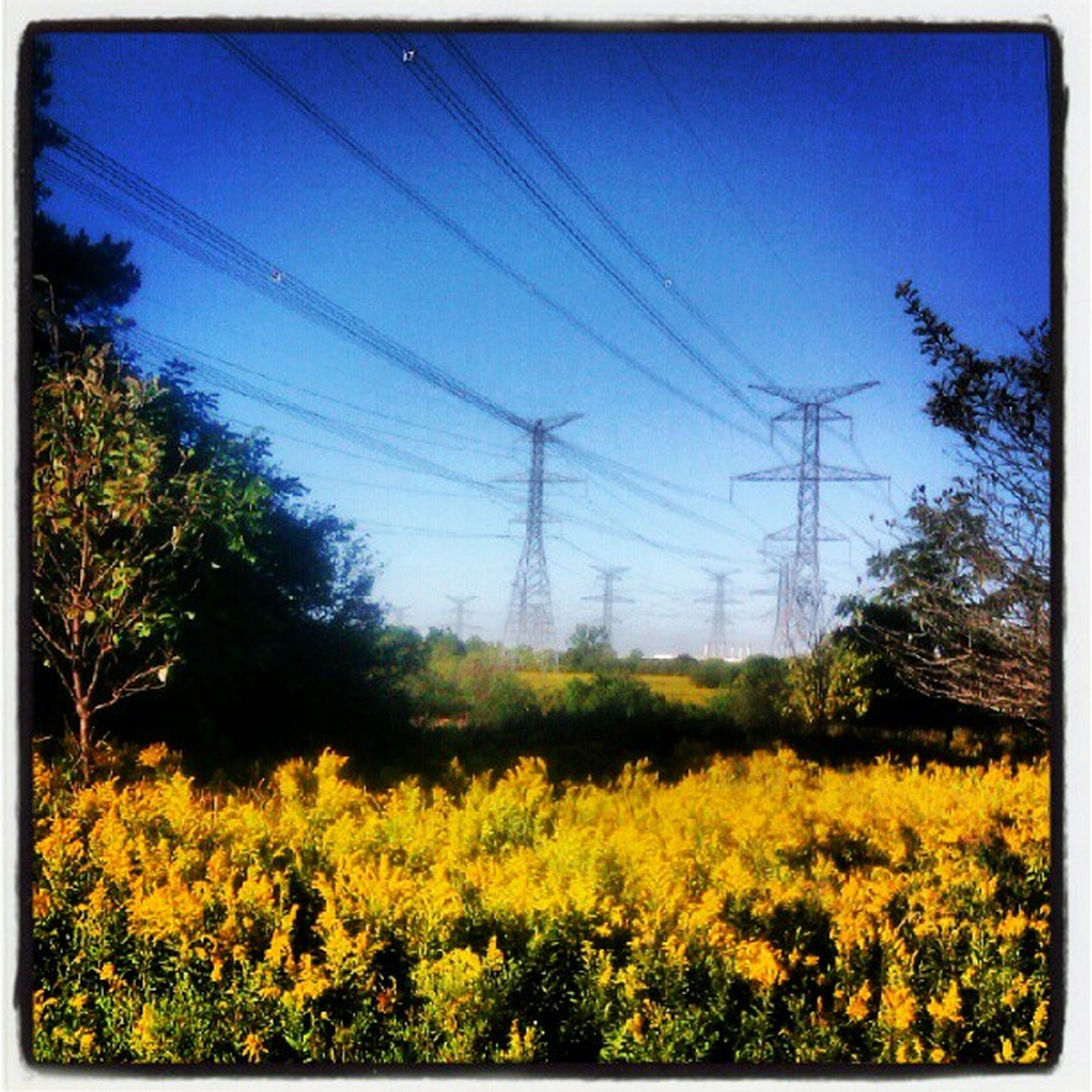Morning drive to work. Scenery Nature Nature Photography Nature_collection Hydro Power Hydroline Flowers Yellow Flower Yellow Flowers