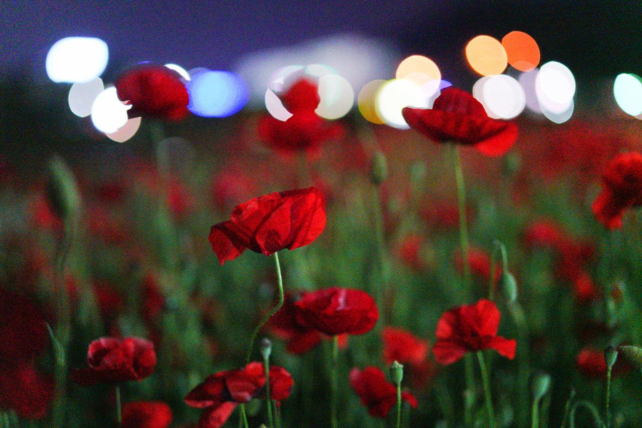 Red No People Night Close-up Outdoors Illuminated Flower Sky 양귀비 광양 순천스냅 광양스냅 여수스냅 Hanguo Korea
