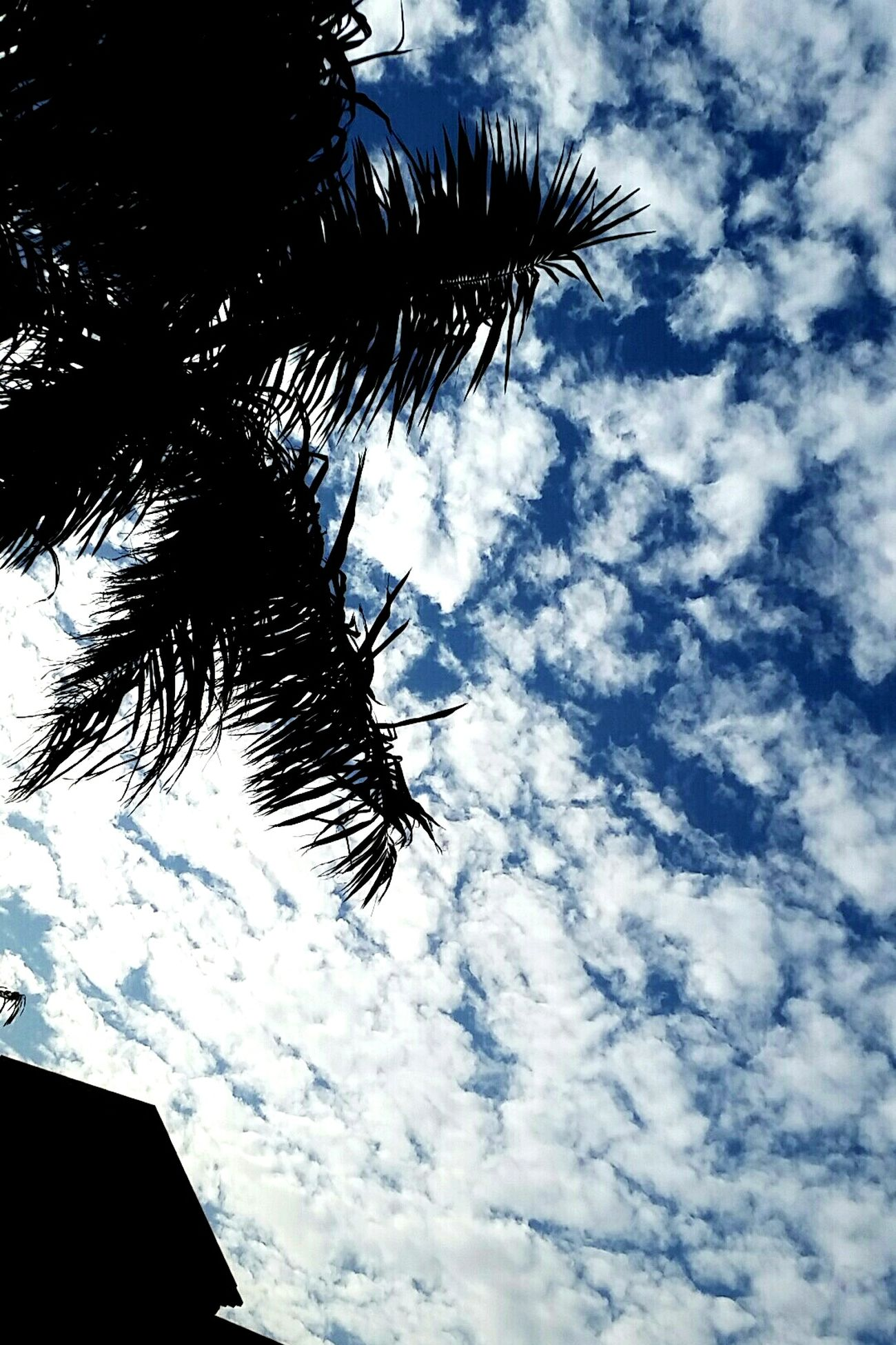 Low Angle View Sky Cloud - Sky No People Outdoors Crackedsky Phoyography Cracked Natural Beauty Landscape