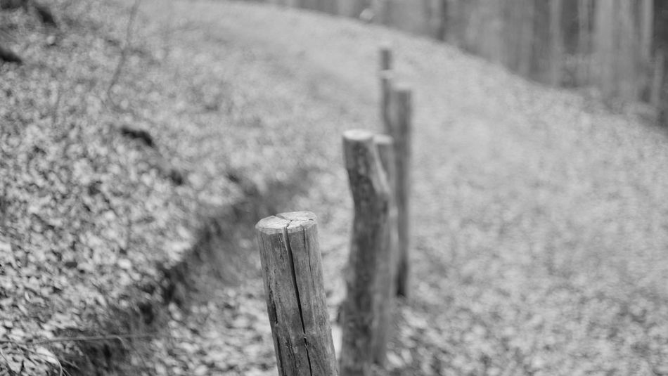 Nature No People Focus On Foreground Outdoors Close-up Wood Wooden Post Sony A6000 Bokeh Day B&w Blackandwhite Black & White