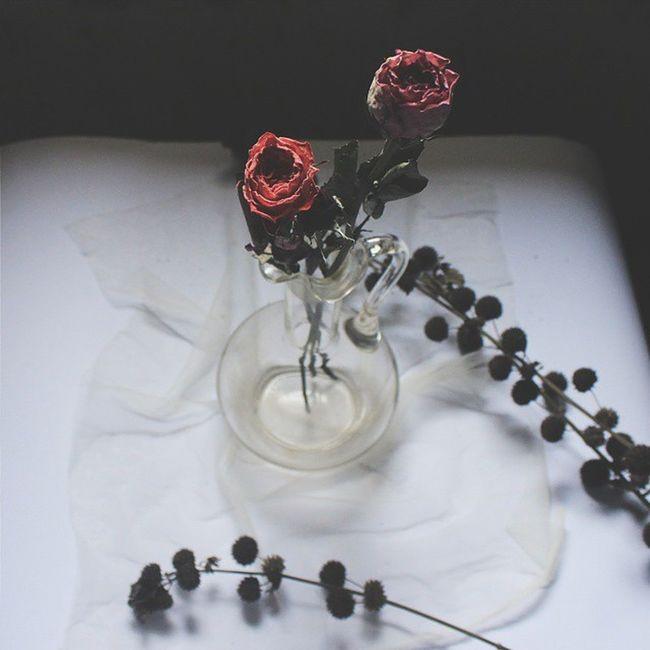 Dry SFB Flower Sfbflowerinvase Vas Setorfotobareng Vscocam VSCO Jj_indetail 9vaga_shabbysoft9 9vaga_dailytheme9